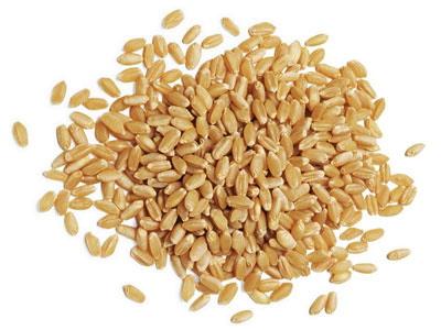 1011-grains-mdn